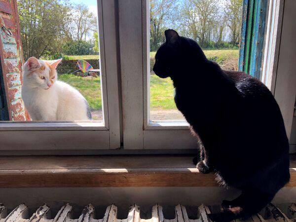 Un gatto nero domestico guarda un gatto seduto fuori dalla finestra, nel villaggio di Blecourt durante le restrizioni imposte per rallentare la pandemia del nuovo coronavirus (COVID-19), Francia, il 29 marzo 2020 - Sputnik Italia