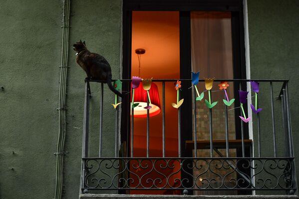 Un gatto siede su un balcone a Pamplona, nel nord della Spagna, giovedì 2 aprile 2020 - Sputnik Italia