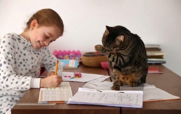 Kaethe Singer, accompagnata dal suo gatto, studia a casa durante una quarantena per la diffusione del coronavirus (COVID-19), a Jugenheim, Germania, il 19 marzo 2020 - Sputnik Italia