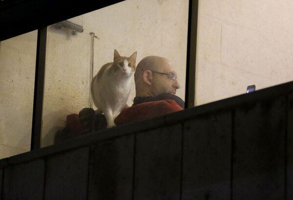 Un uomo siede a casa sua mentre il suo gatto guarda attraverso una finestra del balcone a Beirut, Libano, martedì 31 marzo 2020 - Sputnik Italia