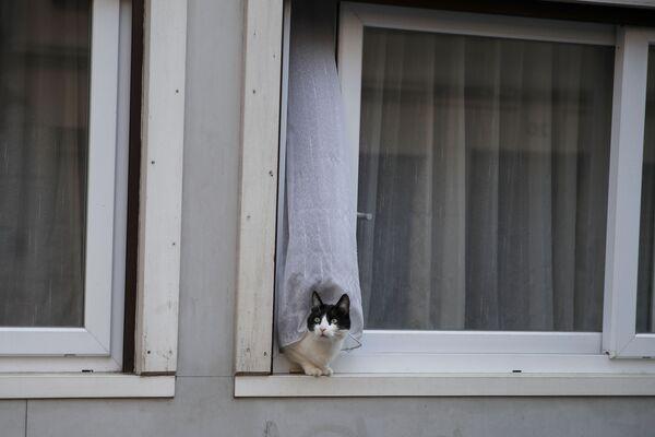 Un gatto si affaccia sulla strada da una finestra a Parigi, il 5 aprile 2020 - Sputnik Italia