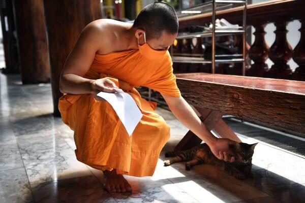 Un monaco accarezza un gatto nel tempio buddista di Wat Pak Nam a Bangkok, il 16 marzo 2020 - Sputnik Italia