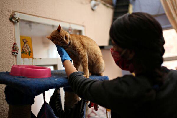 Tatiana Aguayo, attivista per i diritti degli animali, con un gatto in un rifugio per animali a Bogotà, Colombia, il 4 aprile 2020 - Sputnik Italia