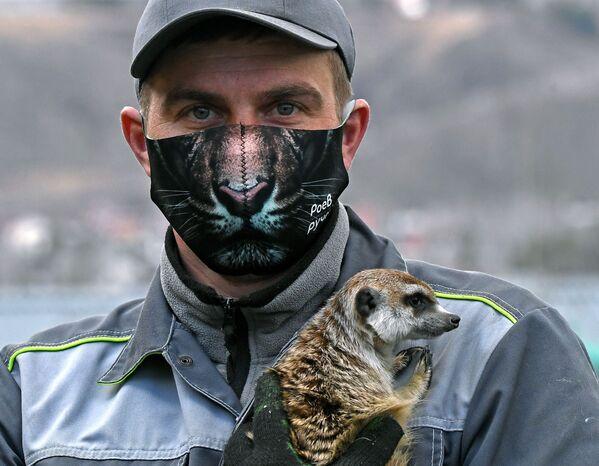 Zoologo del parco di flora e fauna Royev Ruchey Andrey Makhrov con il suricato Ricky a Krasnoyarsk - Sputnik Italia