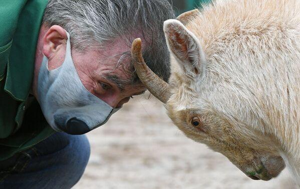 Oleg Chipura, impiegato dello zoo Roev Ruchey, gioca con una capra di nome Nikita a Krasnoyarsk - Sputnik Italia