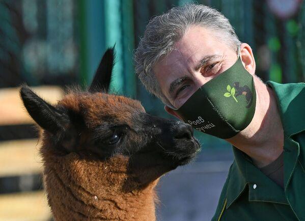 Oleg Chipura, impiegato dello zoo di Roev Ruchey con un cucciolo di nome Chernomor - Sputnik Italia