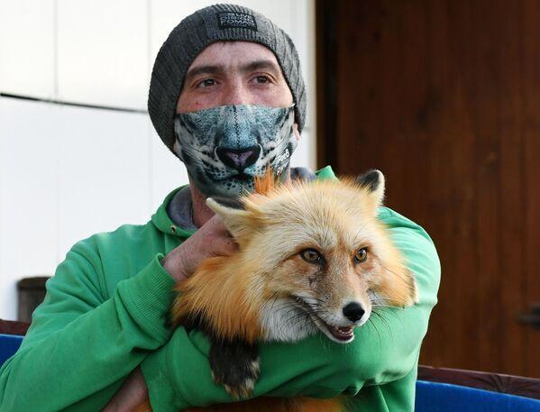 Zoologo del parco di flora e fauna di Royev Ruchey Vyacheslav Barkalov con una maschera protettiva creativa con la volpe Ralph - Sputnik Italia