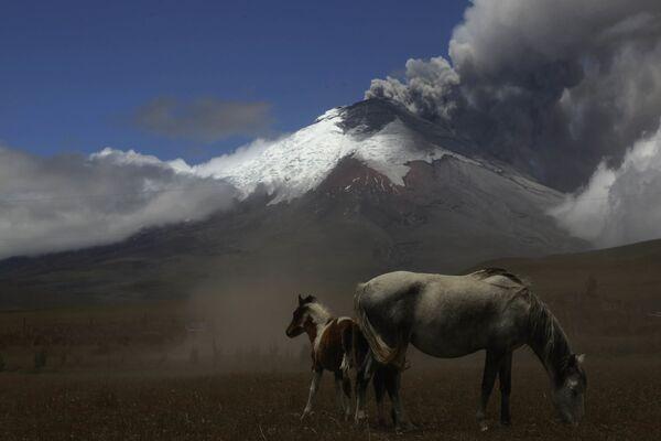 Il Cotopaxi è un vulcano delle Ande che si trova in Ecuador - Sputnik Italia