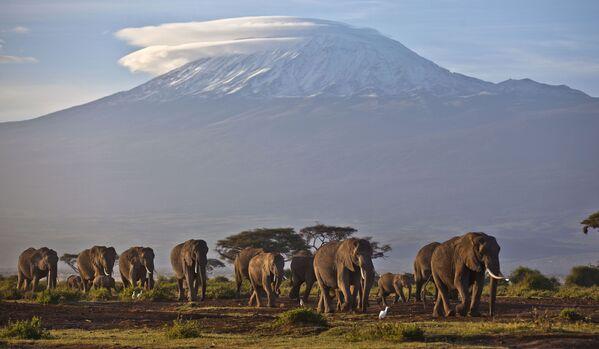Il Kilimangiaro o Chilimangiaro, con i suoi tre coni vulcanici Kibo, Mawenzi e Shira, è uno stratovulcano in fase di quiescenza, situato nella Tanzania nordorientale.  - Sputnik Italia