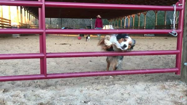 cane salta - Sputnik Italia