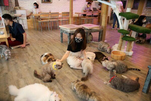 Visitatori del caffè Caturday Cat a Bangkok, Thailandia. - Sputnik Italia