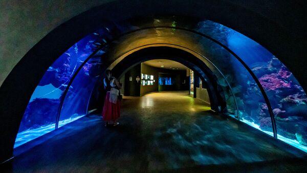 Un visitatore all'Acquario Civico di Milano - Sputnik Italia